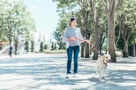 生活習慣病の予防には犬の散歩!?